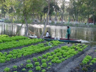 Chinampa agricultural island used for aquaponics.